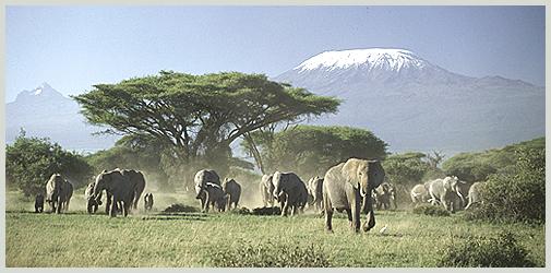 elephants-kilimandjaro.jpg
