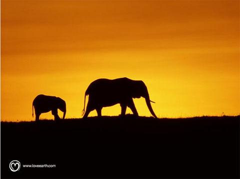 unjoursurterre-elephants.jpg