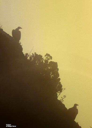 vautours.jpg