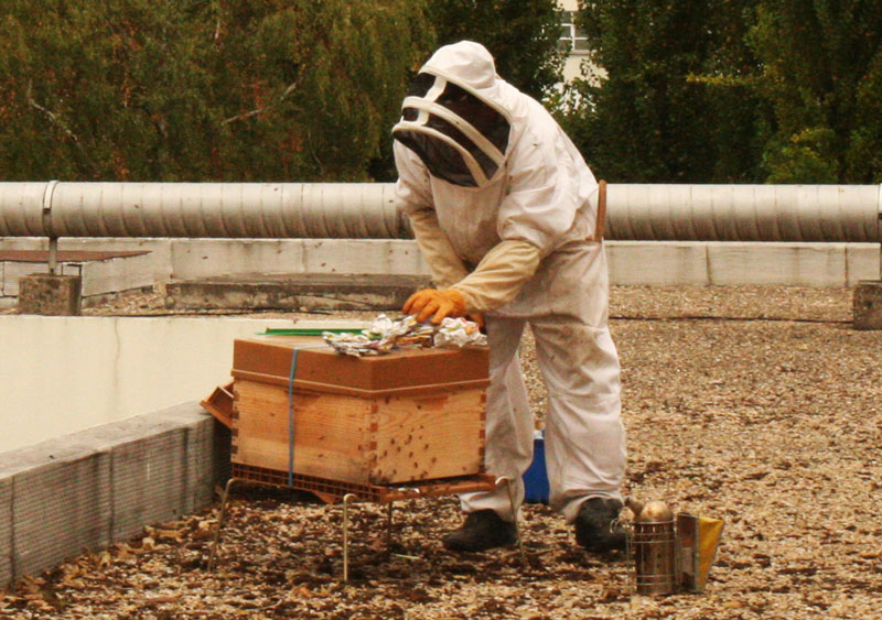 Des ruches sur le toit de votre entreprise