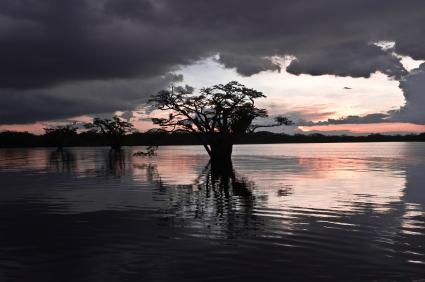 Pollueur payeur : Chevron condamné à 18 milliards d'amende en Equateur