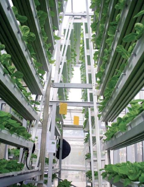Les fermes verticales : un premier essai commercial à Singapour
