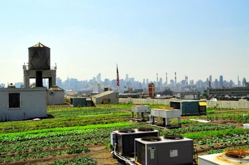 Photo: Brooklyn Grange Farm