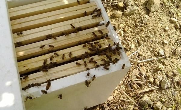 assoc-abeilles-ruches