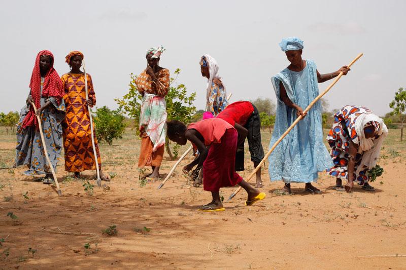 Crédit Photo : Unesco Green Citizen / Cahen / Sipa
