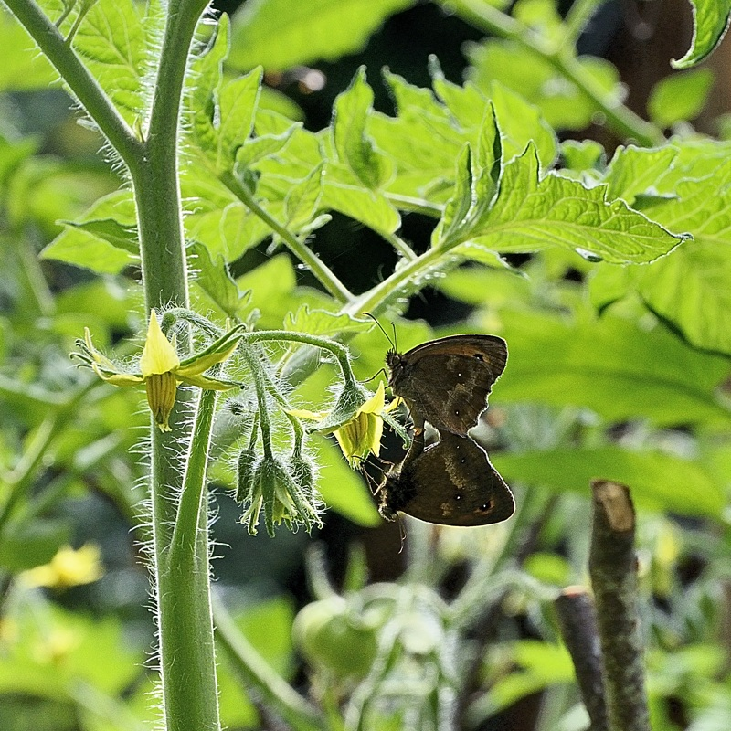 _DSC9544-papillons