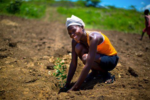 Plantation d'arbres - Haïti - Crédit Photo A.F Cortes