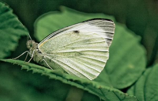 Rapport : aides publiques dommageables à la biodiversité