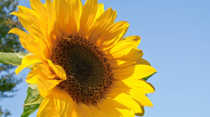 Here comes the sun : l'énergie solaire inspirée de la nature