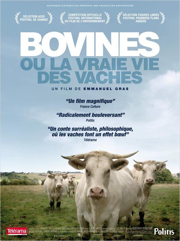 Bovines : un autre regard sur les vaches