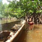 Les femmes et les jeunes adolescentes cherchent taiknuktuk (Anondontia philippiana) et sikoira (Austriella corrugata). Une partie de leur corps est immergé dans l'eau, et leurs jambes sont enfoncées dans la vase. Avec leurs doigts de pieds elles parviennent à identifier les coquillages. © Ariadna Burgos / MNHN