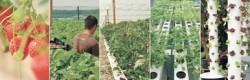 Un démonstrateur d'agro-écologie urbaine en économie circulaire