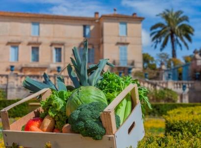 Montpellier : la permaculture citadine fait sa première saison au château de Flaugergues