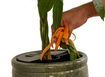 AquaCompot : Faire pousser ses plantes avec des épluchures…