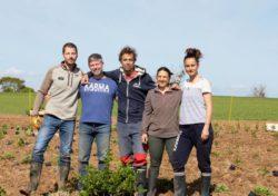 Bretagne : une nouvelle production de thé se met en place
